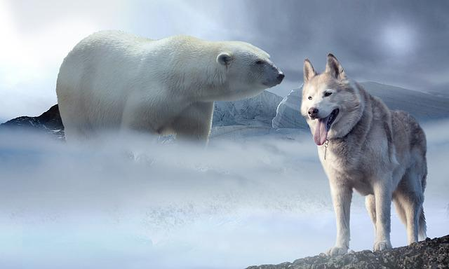 Ice, Snow, Polar Bear, Wolf, Husky, Glacier, Ice Age