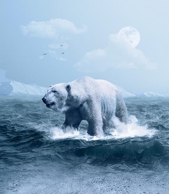 Polar Bear, Arctic, Predator, Ice, Snow, Water, Nature