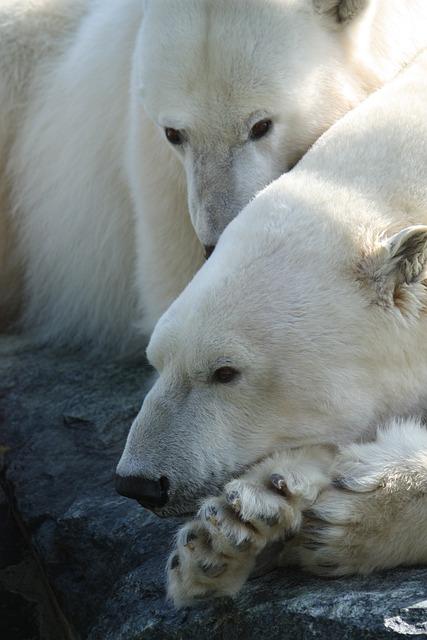 Polar Bear, Stuttgart, Zoo, White