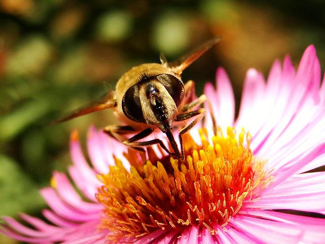 Nature, Apiformes, Insect, Pollen, Honey, Animals