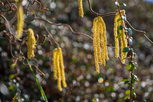Hazel, Nature, Pollen, Hazelnut, Bush, Spring