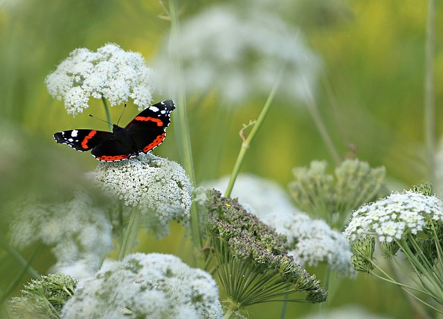 Butterfly, Hives, Flowers, Summer, Pollen, Nature