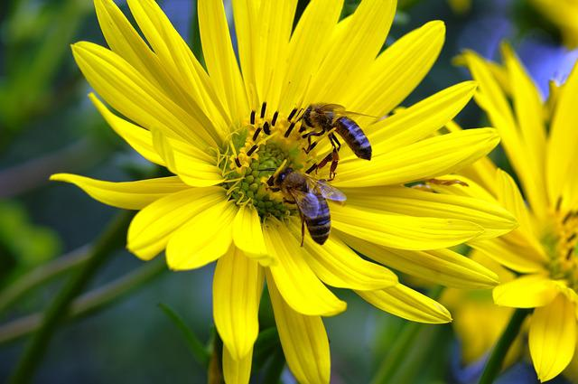 Bees, Honey, Flower, Pollen, Collect Honey, Insect