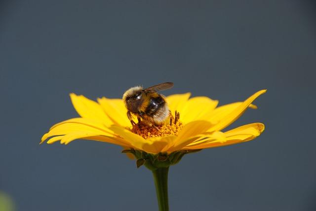 Nature, Flower, Yellow, Bug, Bumblebee, Pollen