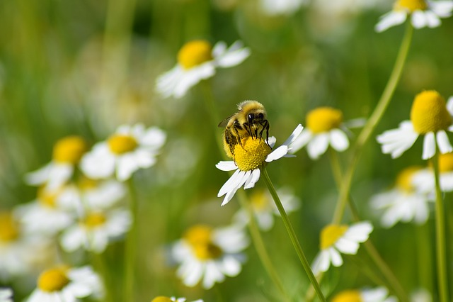 Bee, Flower, Yellow, Summer, Pollen, Insect, Honey
