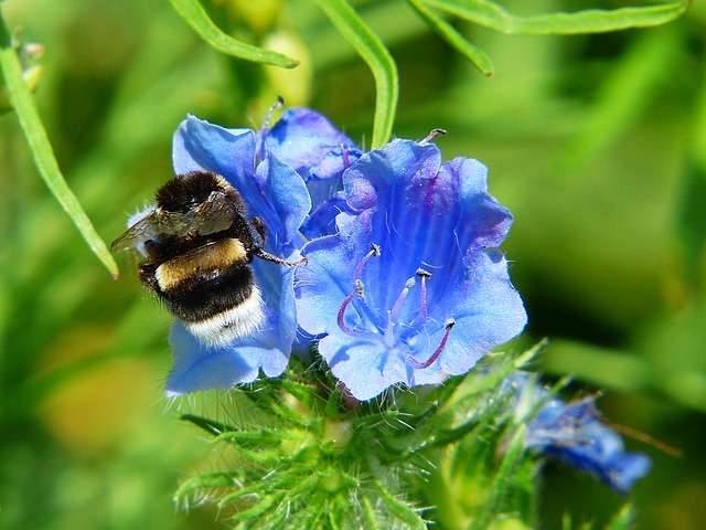 Bellflower, Hummel, Flower Meadow, Pollen, Pollination
