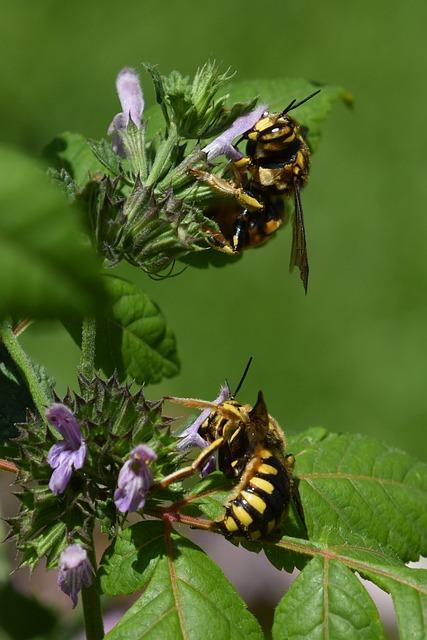 Bees, Flowers, Pollination, Garden, Bloom, Pollen