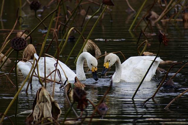 Animal, Pond, Lake, Waterside, Waterweed, Bird