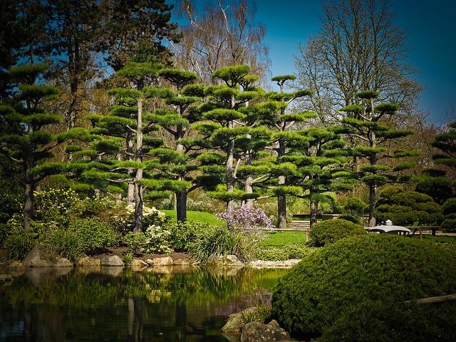 Cedar, Japanese Cedar Tree, Garden, Pond, Nature