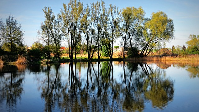 Mirror, Tree, Water, Pond, Branches, Nature, Foliage