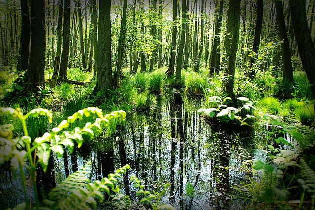 Forest, Darß, Spring, Trees, Pond, Mirroring, Grasses