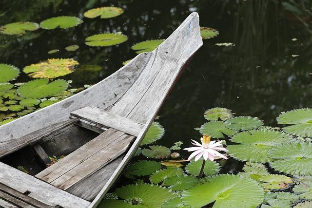 Nymphaea Alba, Pond, Lotus