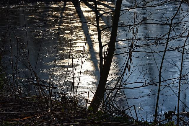 Ice, Water, Frozen, Pond, Shiny, Stems, Silhouettes