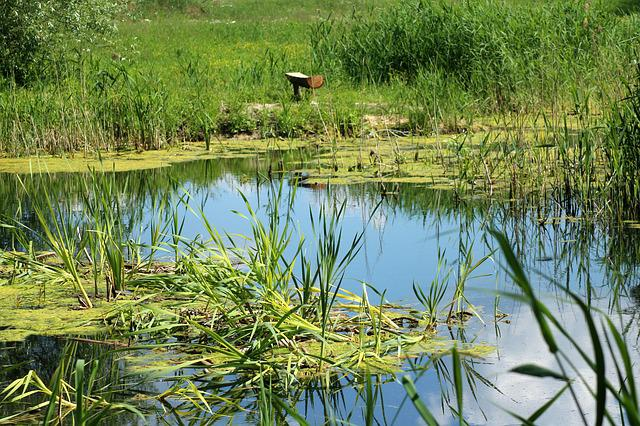 Pond, Over The Water, Water, Vegetation, Nature, View