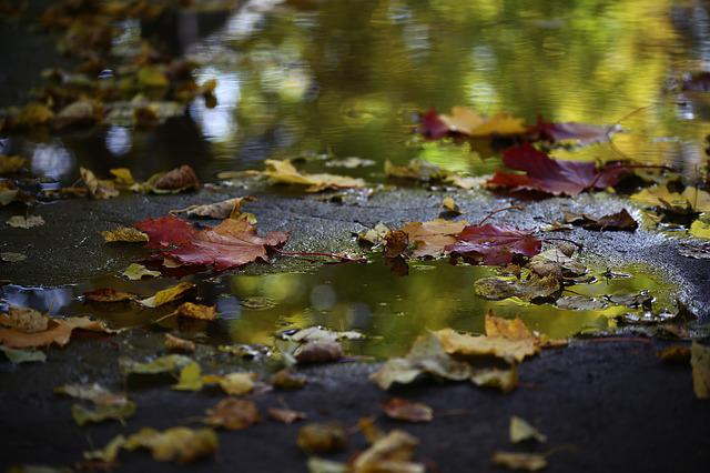 Autumn, Water, Pond, Sheet