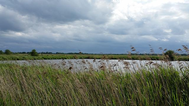 Pond, Pools, East Frisia, Water, Forward, Storm, Reed