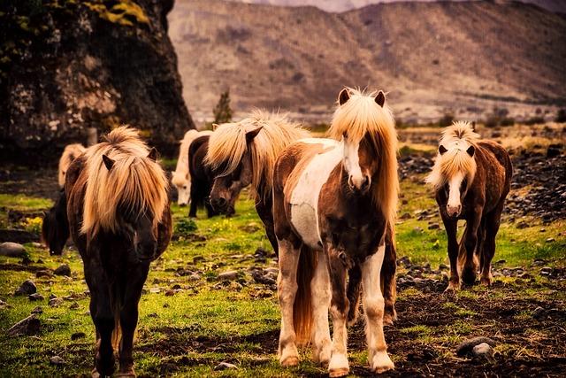 Iceland, Horses, Pony, Ponies, Landscape, Mountains