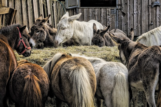 Animals, Donkey, Farm, Mule, Pony, Horse, Rural