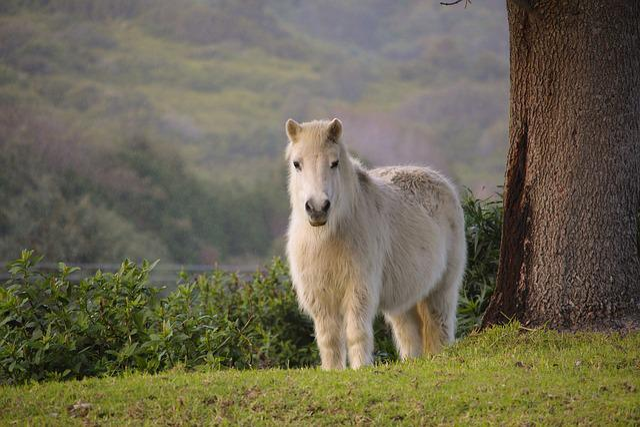 Pony, White, Nature, Horse, Green