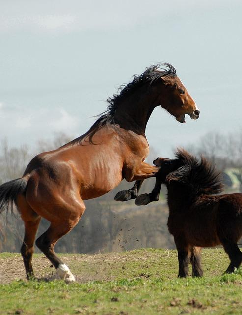 Horse, Pony, Games