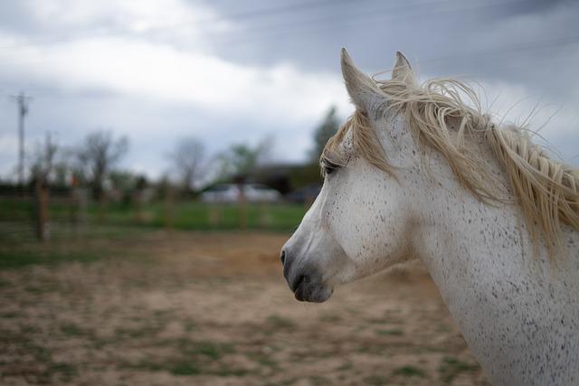 Horses, Horse, Pony, Nature, Animal, Equine, Equestrian