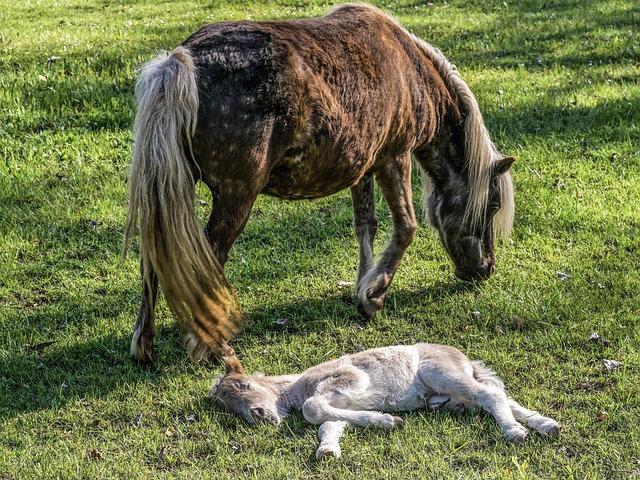 Mare, Foal, Horses, Pony, Mane, Mammal, Grass, Summer