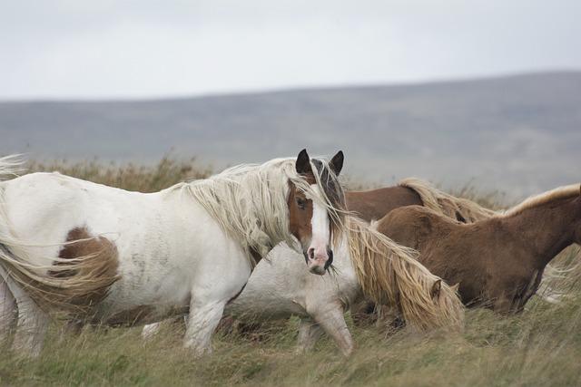 Horse, Pony, Mane, Animal, Rural, Mare