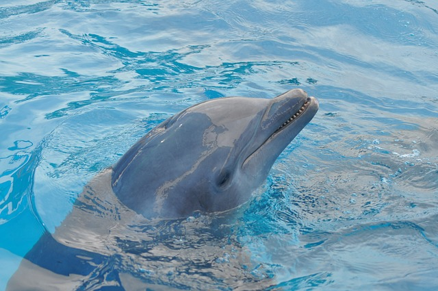 Dolphin, Water, Blue, Pool, Blue Water