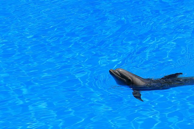 Delfin, Water, Pool, Preview, Swim, Fins, Mammal, Blue