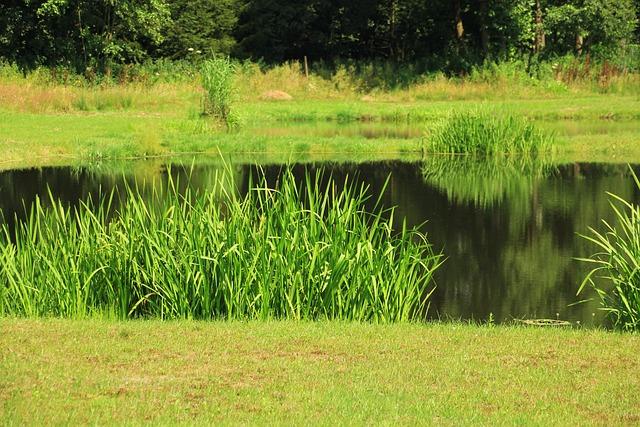 Pond, Fishing Pond, Nature Reserve, Pools, Nature