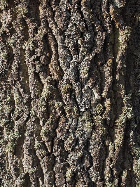 Beef, Poplar, Poplar Bark, Tribe, Log, Tree