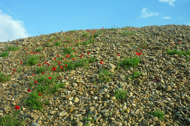 Gravel Pit, Poppies, Red, Flowers, Stones, Collection