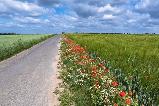 Poppy, Chamomile, Away, Flower Strips, Flower Meadow