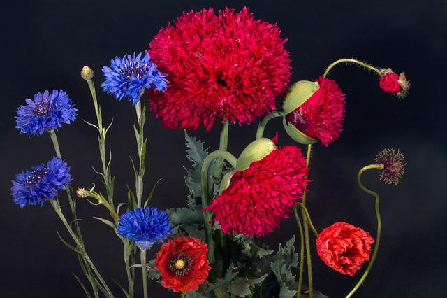 Cornflowers, Klatschmohn, Poppy Flower, Wild Flower