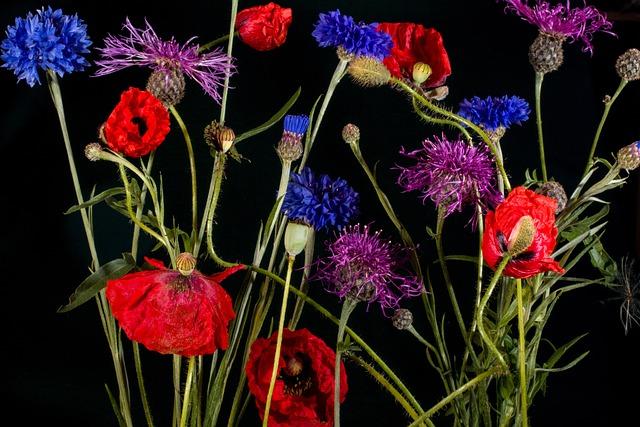 Cornflowers, Klatschmohn, Poppy, Mohngewaechs, Flower
