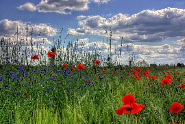 Brandenburg, Germany, Nature, Poppy