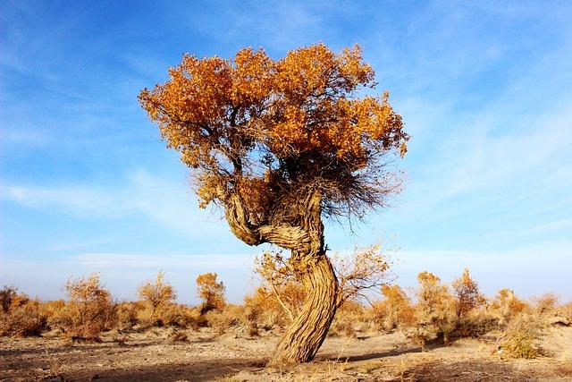 Trees, Populus, Desert