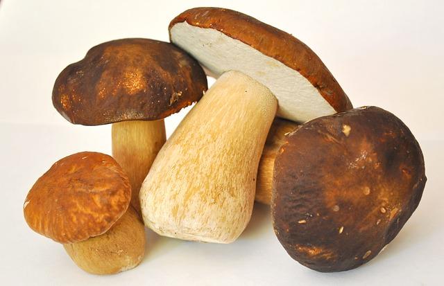 Mushroom, Porcini Mushrooms, Forest