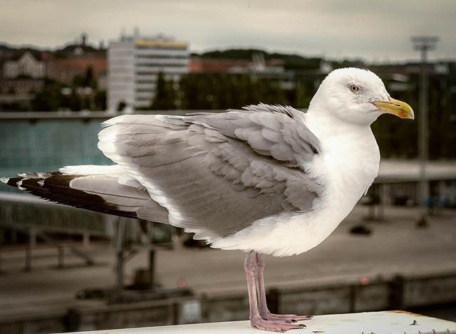 Seagull, Bird, Port, Fly, Sea, Seevogel, Animal, Close