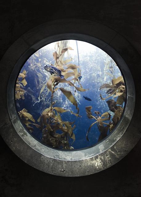 Portal, Fish, Aquarium