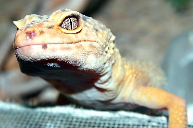 Nature, Reptiles, Animals, Portrait