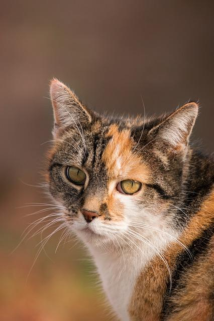 Cute, Animal, Cat, Portrait
