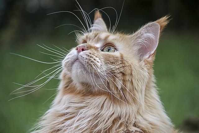 Nature, Animal, Cute, Cat, Fur, Mammal, Portrait