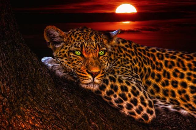 Leopard, Cats, Animal, Print, Nature, Black, Portrait