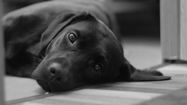 Dog, Portrait, Cute, Black And White, Puppy, Animals