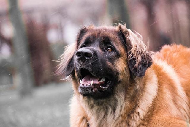 Dog, Cute, Portrait, Pet