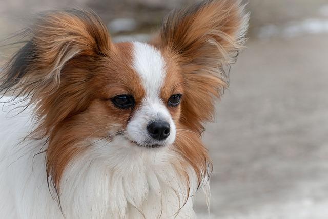 Dog, Animal, Cute, Portrait, Animal Portrait, Small