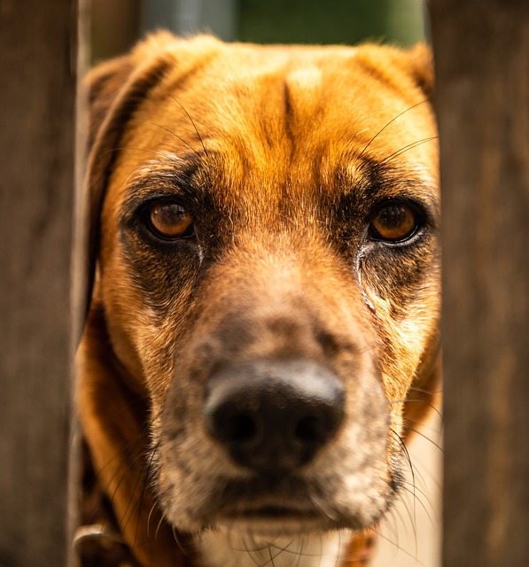 Dog, Animal, Portrait, Fence