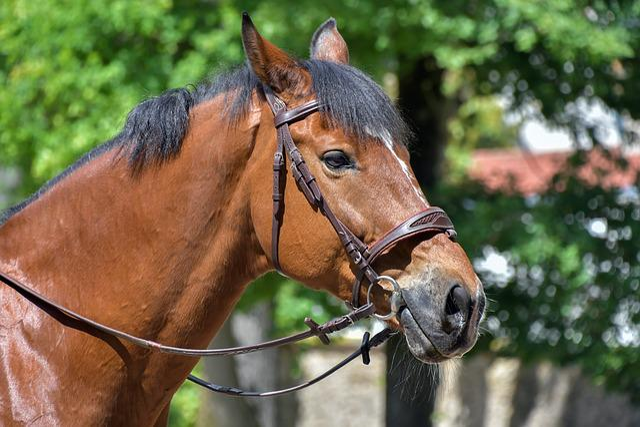 Horse, Head, Profile, Portrait, Equine, Animal