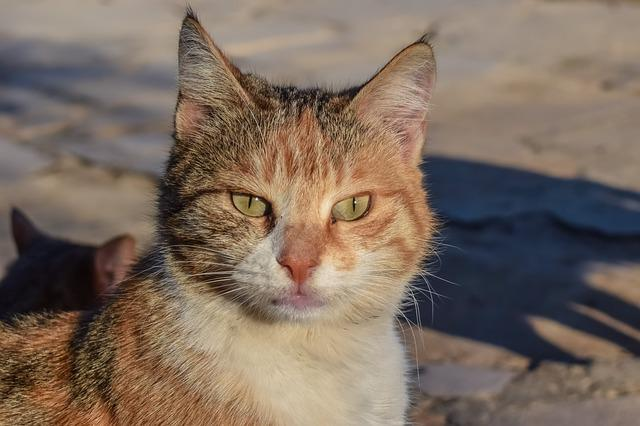Cat, Stray, Animal, Face, Eyes, Street, Portrait